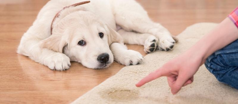 slider-pet-cleaning